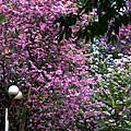 Cherry Blossom 3 by Jeelan Clark
