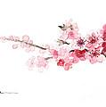 Cherry Blossom Art Print Watercolor Painting by Joanna Szmerdt