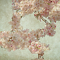 Cherry Blossom Bridal Bouquet by Paulette B Wright