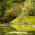 Cherry Blossom Japanese Garden by Sebastian Musial