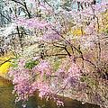Cherry Blossom Land by Regina Geoghan