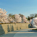 Cherry Blossoms 2013 - 022 by Metro DC Photography
