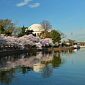 Cherry Blossoms 2013 - 041 by Metro DC Photography