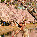Cherry Blossoms 2013 - 077 by Metro DC Photography