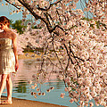 Cherry Blossoms 2013 - 079 by Metro DC Photography