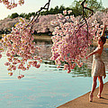 Cherry Blossoms 2013 - 085 by Metro DC Photography