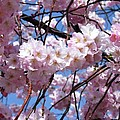 Cherry Blossom Trees Of Branch Brook Park 3 by Allen Beatty