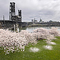 Cherry Blossoms Along Willamette River by Jit Lim