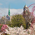 Cherry Blossoms And The Sacred Heart by Regina Geoghan