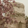 Cherry Blossoms At The Martin Luther King Jr Memorial by Leah Palmer