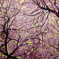 Cherry Blossoms by Bobby Zeik