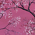 Cherry Blossoms  by Darice Machel McGuire
