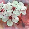 Apple Blossoms In Soft Pink - Digital Paint by Debbie Portwood