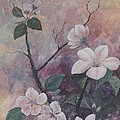 Cherry Blossoms In The Cosmos by Sandy Clift