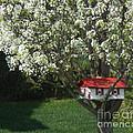 Cherry Home by Ruta Naujokiene