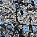 Cherry Lane Series  Picture B by Barb Dalton