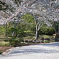 Cherry Lane Series  Picture G by Barb Dalton