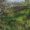 Cherry Orchard Evening by Madonna Siles