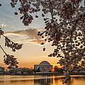 Cherry Sunrise Burst by Erika Fawcett