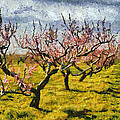 Cherry Trees 3.0 by Michelle Calkins