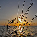 Chesapeak Bay At Sunrise by Bill Cannon