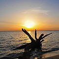 Chesapeake Bay Driftwood At Sunset by Bill Cannon