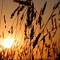 Chesapeake  by JC Findley
