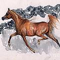 Chestnut Arabian Horse 2014 11 15 by Angel Ciesniarska