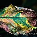 Chestnut Autumn Mosaic by Barbara McMahon