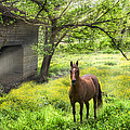 Chestnut Horse In A Sunny Meadow by Debra and Dave Vanderlaan