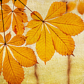 Chestnut Leaves At Autumn by Jenny Rainbow