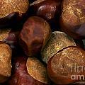 Chestnuts by Jolanta Meskauskiene