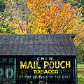 Chew Mail Pouch 2 by Steve Harrington