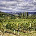 Chianti Country by Fran Gallogly