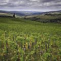 Chianti Region Of Tuscany by Fran Gallogly