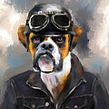 Chic Boxer Aviator by Jai Johnson