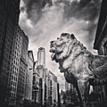 Art Institute Of Chicago Lion Picture by Paul Velgos
