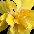 Chicago Botanical Gardens - 71 by Ely Arsha