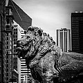 Chicago Lion Statues In Black And White by Paul Velgos