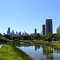 Chicago Skyline From Lincoln Park Zoo by Aaron Edrington