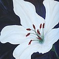 Chicago Snow White Lusterlily by Deborah Schuster