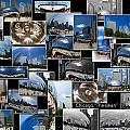 Chicago The Bean Collage by Thomas Woolworth