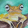 Chichia Tree Frog by Linda Waidelich