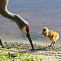 Chick At The Lake by Zina Stromberg