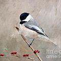 Chickadee And Berries by Kerri Farley