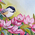 Chickadee And Crabapple Flowers by Janet Zeh