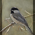 Chickadee Early Bird II by Debbie Portwood