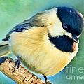 Chickadee Greeting Card Size - Digital Paint by Debbie Portwood