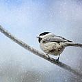 Chickadee In The Snow by Jai Johnson