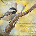 Chickadee With His Prize And Verse by Debbie Portwood
